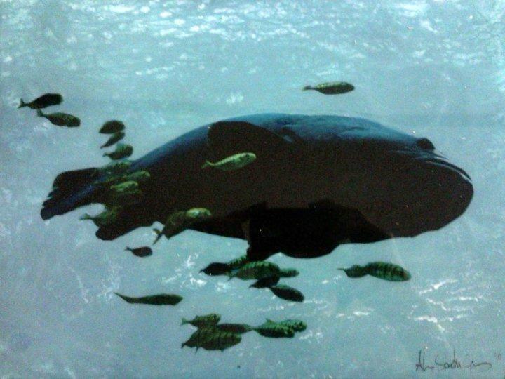 Big Fish, Little Fish #1 10 x 14 Mixed Media on Glass